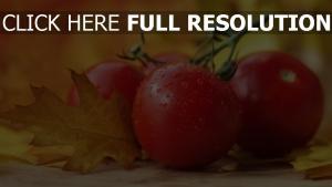 gemüse tropfen tomaten