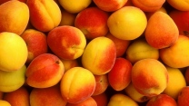 aprikosen frucht frisch reichlich
