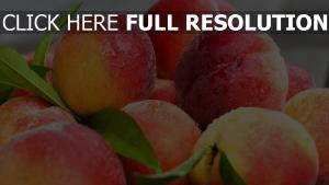 nektarinen pfirsiche blätter tropfen