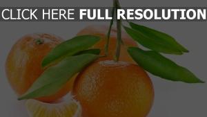 mandarine scheibe blatt zweig frucht