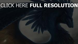 drachen flügel federn