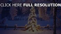 winter schnee bäume tanne weihnachten natur
