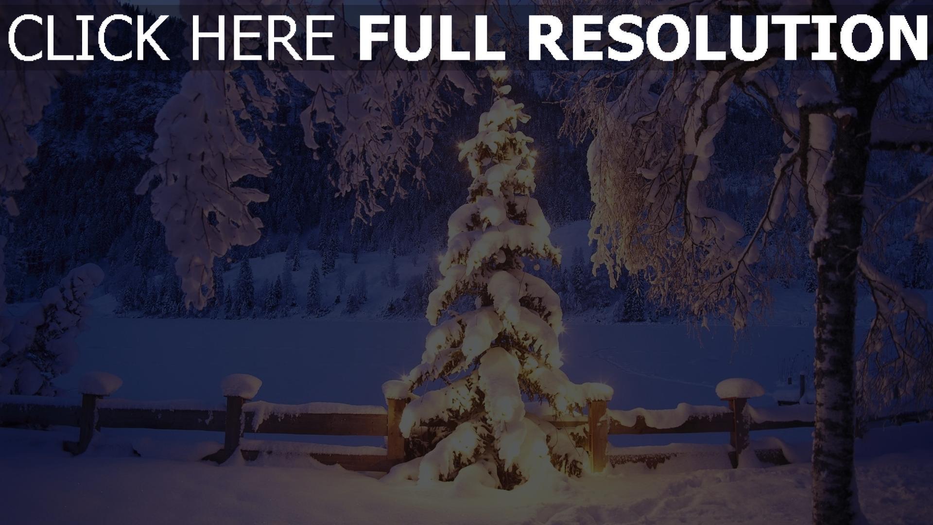 HD Hintergrundbilder winter schnee bäume tanne weihnachten natur ...