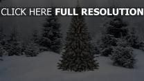 schnee winter tanne girlande wald neujahr weihnachten