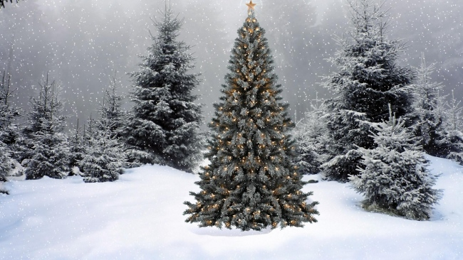 hd hintergrundbilder schnee winter tanne girlande wald neujahr weihnachten