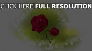 rose blumen reflexion weinrot romantisch