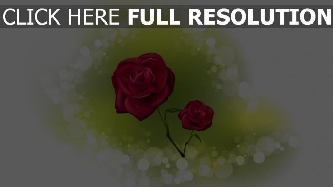 hd hintergrundbilder rose blumen reflexion weinrot romantisch
