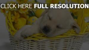 welpe schlaf eier ostern