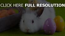 kaninchen huhn eier ostern