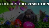 kaninchen ostern eier tulpen