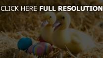 entlein eier ostern heu