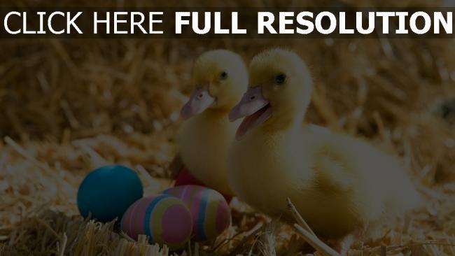 hd hintergrundbilder entlein eier ostern heu