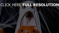 geister hund jack-o-latern spinngewebe halloween