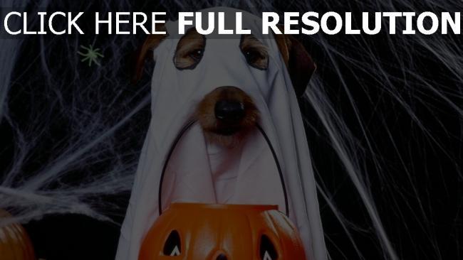 hd hintergrundbilder geister hund jack-o-latern spinngewebe halloween