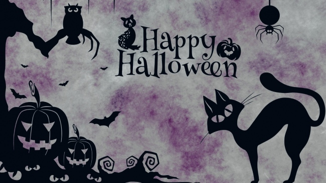 hd hintergrundbilder minimalismus spinne jack-o-latern eule halloween katze
