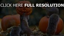 halloween kürbis eichhörnchen maske