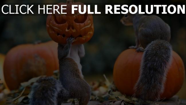 hd hintergrundbilder halloween kürbis eichhörnchen maske
