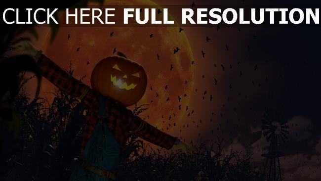 hd hintergrundbilder krähe mond jack-o-lantern vogelscheuche halloween feld