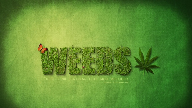 hd hintergrundbilder weeds mary-louise parker alexander gould kevin nealon hunter parrish