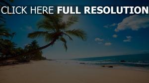 strand palmen meer sand sonne sommer urlaub
