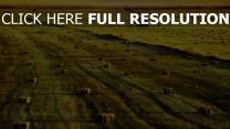 armenien feld gras ernte heu