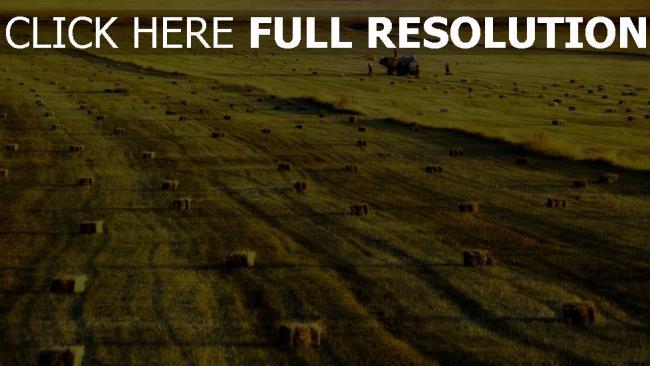 hd hintergrundbilder armenien feld gras ernte heu