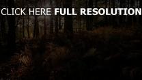herbst wald farne sonne bäume