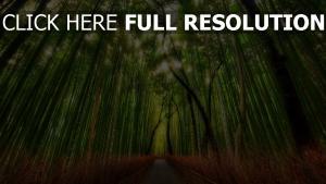 bambus bäume holz hain spur