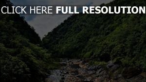 wald bäume fluss steine track schlucht