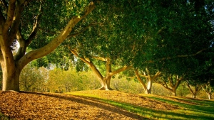 bäume licht blätter gras sommertag
