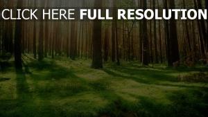 wald gras bäume sonne schön