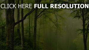 dunst wald bäume nebel glühen schön