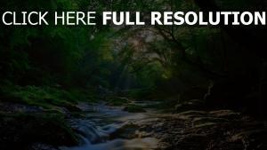 bäume wald fluss strahlen sonne schöne
