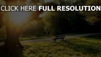 park baum teich sitzbank sonne sommer