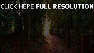 park bäume weg zaun gehweg