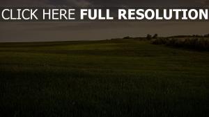 feld grün glatt bäume gras himmel