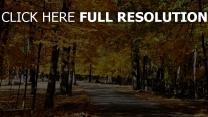 wald park bäume herbst fußweg leaves