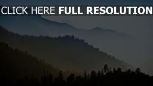 morgen morgendämmerung berge nebel haze fichten