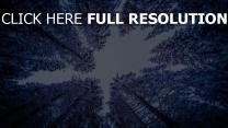 fichten schnee winter wald himmel berg