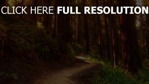 fußweg wald bäume sträucher farne