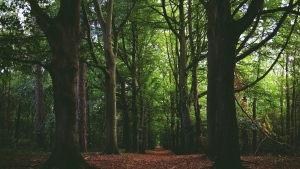 wald bäume blätter gefallene trail