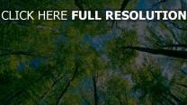 bäume himmel blätter wolken sommer
