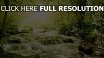 wasser fluss bäume blätter licht glühen