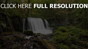 wald wasserfall wasser strom bäume steine