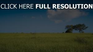 horizont ebene gras baum feld himmel