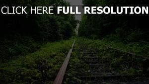 bäume gras erde fährte eisenbahn