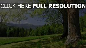 bäume tal tanne berge sommer gras
