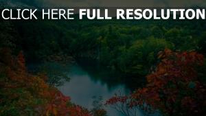 fluss wald bäume blätter landschaft see höhe