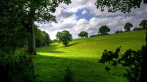 hügel hang bäume sommer weide