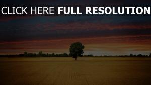 einsamer baum sonnenuntergang himmel wolken feld